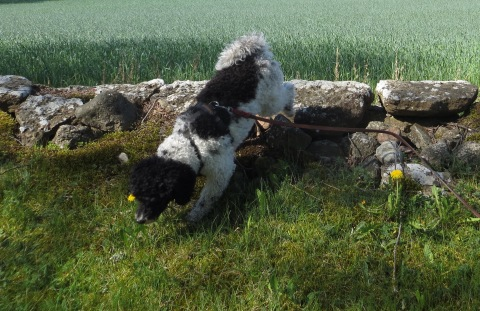 Max i Hagebyhöga